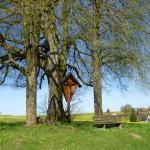Frühling am Naturdenkmal