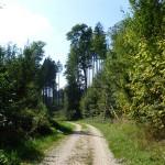 Im Wald zwischen Ettringen und Tussenhausen