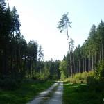 Im Wald bei Ettringen