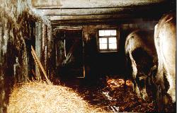 Alter Kuhstall