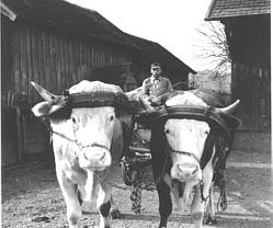 Götzfried Johann fährt aufs Feld
