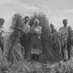 Die Familie bei der Getreideernte