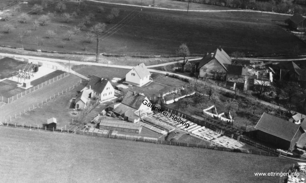 Die  Gärtnerei 1954
