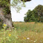 Wer sich aufmacht und auch hinter die Friedhofsmauer in Kirchsiebnach blickt, der entdeckt die schönsten blühenden Wildblumenwiesen. Bild: Augsburger Allgemeine