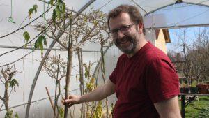 """In einem selbst gebauten """"Palmen-Folien-Gewächshaus"""" hat Johannes Wagner ideale Möglichkeiten zum Überwintern der empfindlichen Pflanzen geschaffen.  Johannes Wagner beim """"Enthüllen"""" des Palmenhauses  Foto Mindelheimer Zeitung"""