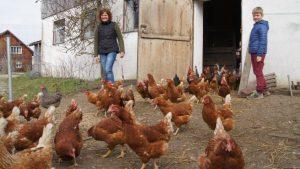 """""""Na endlich!"""", scheinen die Hühner gackern zu wollen, als sie aus ihrem Stall ins Freie dürfen. Hier finden sie jede Mange Platz und Auslauf zum Scharren und Picken. Und das Gras, das sie so gerne fressen. Und davon fressen sie eine ganze Menge.  Foto MZ"""