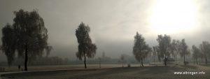 Birken am Radweg nach Siebnach