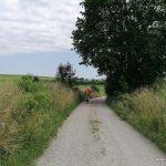 Weg zum Christoph Scheiner Turm