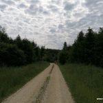 Durch den Wald nach Steinekirch