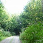 Waldweg - Karte zwischen Punkt 6 und 16