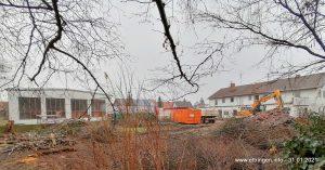 Rodung des ca. 1700 m² großen Grundstücks