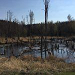 Position 10 - Swamp Lake - Foto: Totobiker